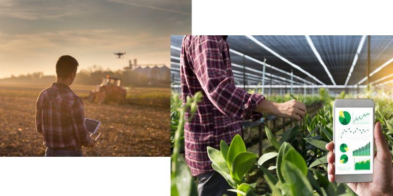 sensori e droni per l'agricoltura blockchain