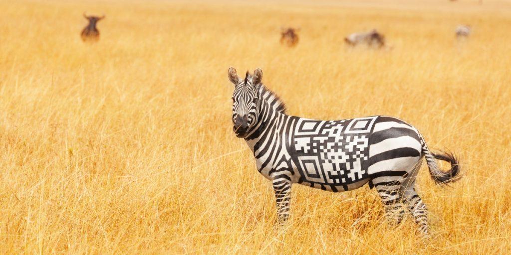 zebra with qr code